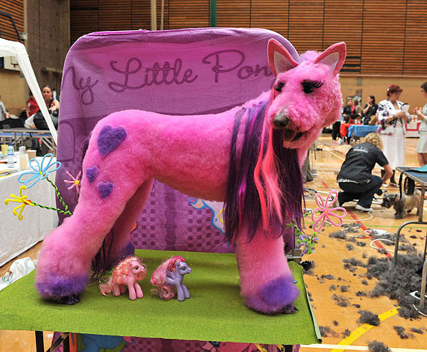 My Little Pony Dog